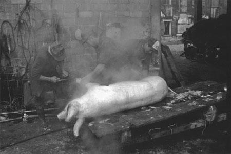 SARETTA PRIMO - Se copa el porçel – 1993- PRIMO CCLASSIFICATO